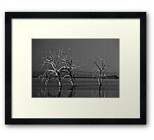 Trees In Salton Sea Framed Print