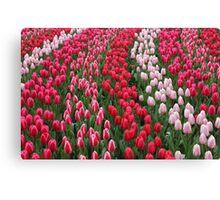 Keukenhof garden red tulips Canvas Print