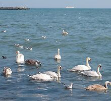 Swans on the sea coast by kirilart