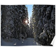 Snowy Forest Poster