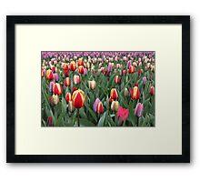 Colorful Tulips in Keukenhof Gardens Framed Print