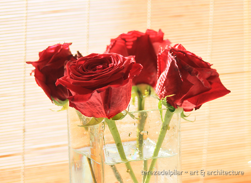 4 ROSES. my 2000th picture on rb. by terezadelpilar~ art & architecture