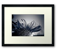 Sunflower Twilight  Framed Print