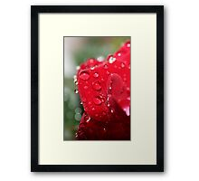 For The Love of Roses Framed Print