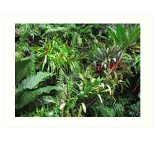 Tropical Forest Flora Background Art Print