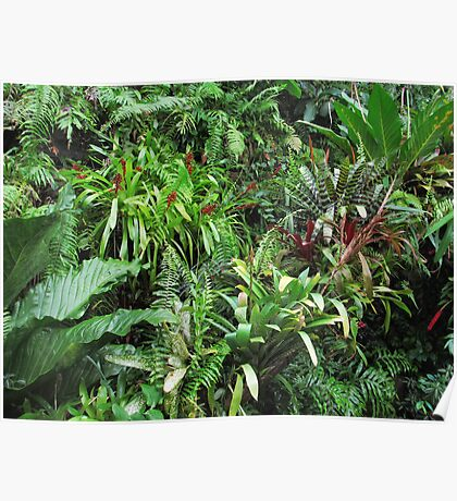 Tropical Forest Flora Background Poster
