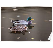 On The Move Duck Refections Poster