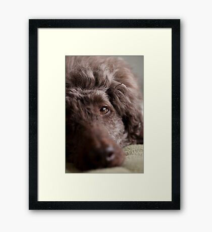 ...sweetie-pie......... Framed Print
