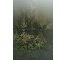Trees in springtime! Photographic Print