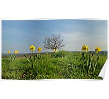 Shropshire in Spring Poster