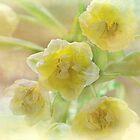 spring display by Teresa Pople