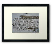 Bird Flock Framed Print