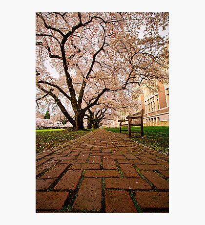 Blooming Giants Photographic Print