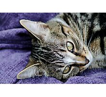 If Only My Ears Could Sleep! Photographic Print