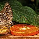 yummy orange by Manon Boily