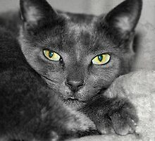 Cats Eyes by Fe Messenger