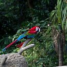 A red, green and blue Macaw on a branch by ashishagarwal74
