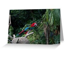 A red, green and blue Macaw on a branch Greeting Card