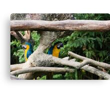 2 Macaws framed by tree branches Canvas Print