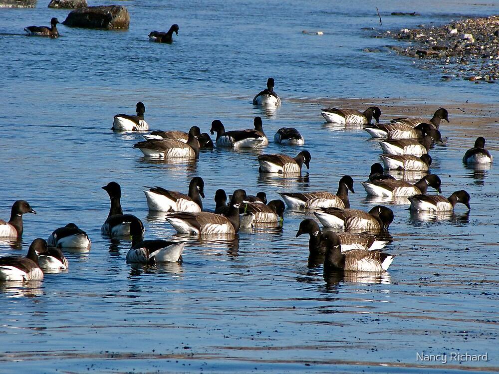 Flock of Brants by Nancy Richard