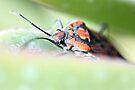 Shield Bug - image 2 by missmoneypenny