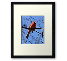Singing in the Sun Framed Print