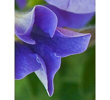 Cobalt Blue Petal Abstract Photographic Print