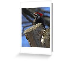 Sitting Handsomely  Greeting Card