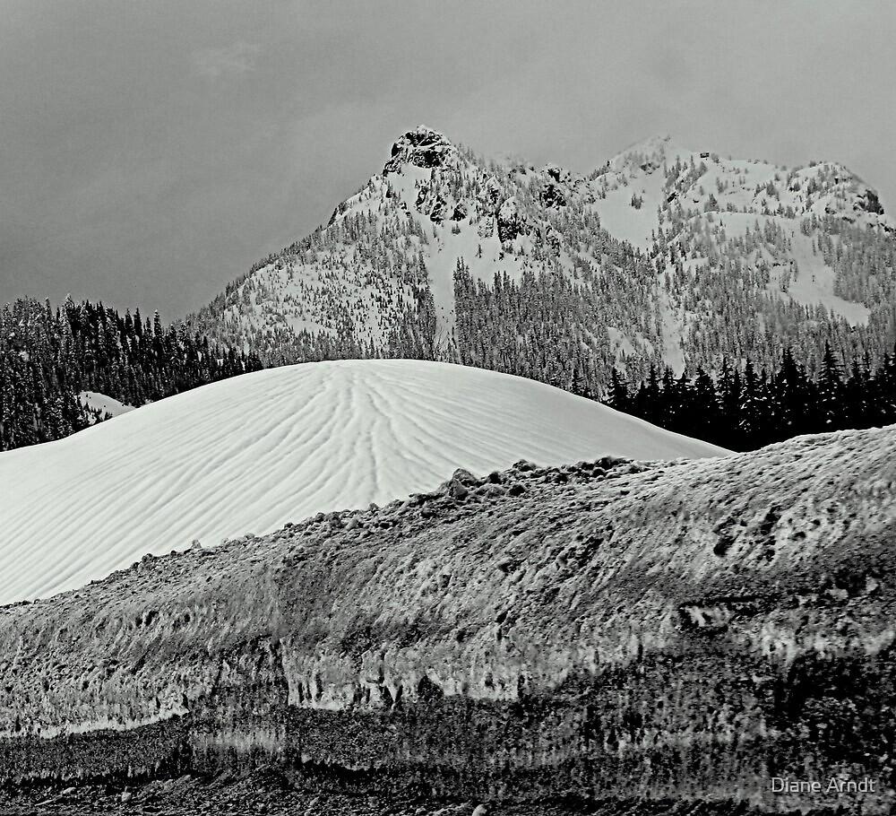Grey Skies Ahead...Washington State by Diane Arndt