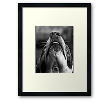 Just The Nose Knows  Framed Print