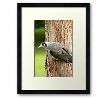 Scrounging Framed Print