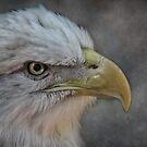 Eagle Profile (re-do) by vigor