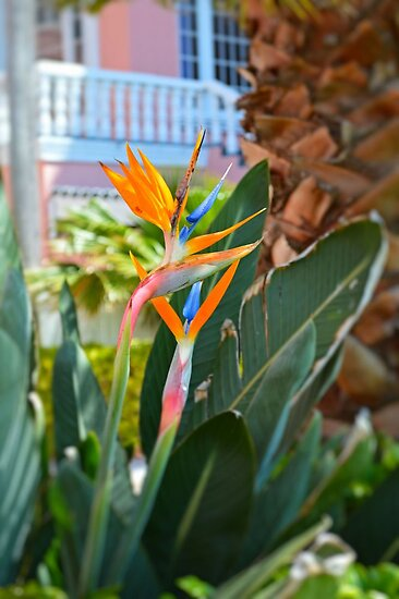 Bird of Paradise by rosaliemcm