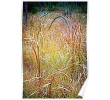 Curly Swamp Grass Poster