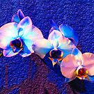 Blue on Blue by shutterbug2010