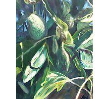 Avocado Lights (acrylic) Photographic Print