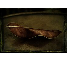 Grungy Leaf Photographic Print