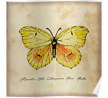 Cleopatra Butterfly German Moth Print Poster