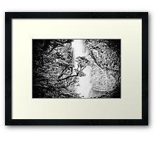 New Zealand Beech Tree Framed Print