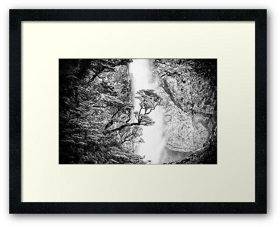 New Zealand Beech Tree by lesslinear