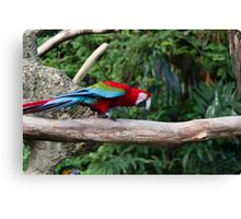 A very colorful and bright Macaw bird Canvas Print