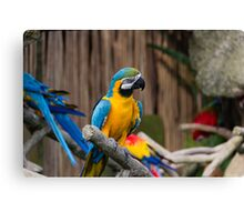 Colorful and bright Macaw bird Canvas Print