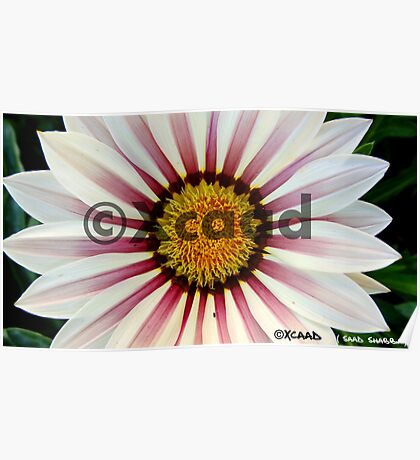 Macro Magic - Flower - Watermarked Poster