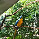 A single Macaw bird on a branch by ashishagarwal74