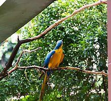 A single Macaw bird on a branch by ashishagarwal74