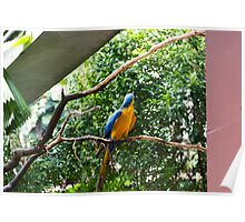 A single Macaw bird on a branch Poster