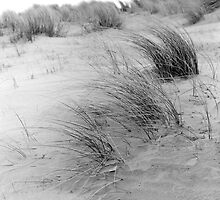 Dune Grass by Paul Berry