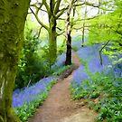 Target Wood Bluebells by John Keates
