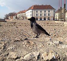 Bird In Budapest by Louise Harrington