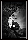 Dog Rock Fox -Batesford Victoria  2013 by bekyimage